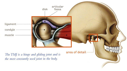 TMJ Therapy - scull diagram